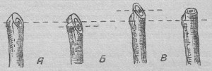Правильная обрезка косточковых